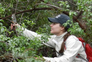 Alex standing in foliage collecting stem sample